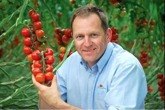 """英国西红柿种植商:LED""""效果惊人"""""""